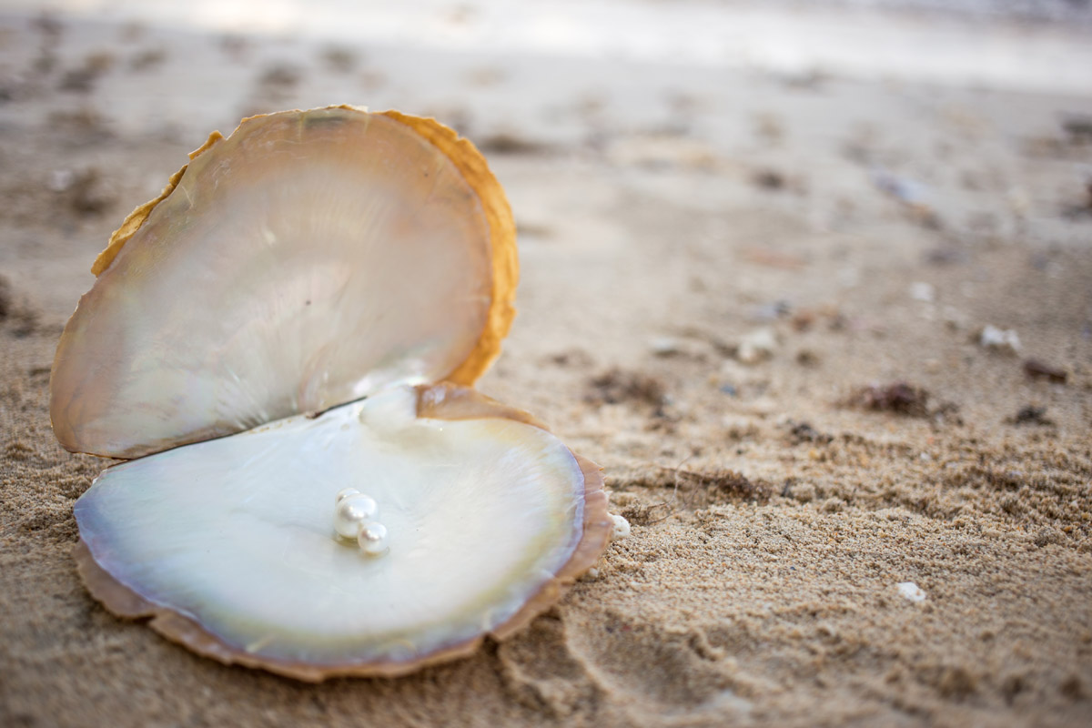Pearl embedded in Shell
